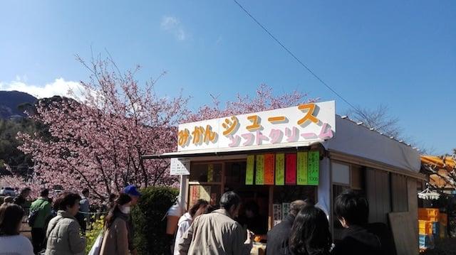 河津桜を見に伊豆へ行ったら飲みたいみかんジュース『はるか』が酸っぱそうなのに余い